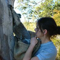 Koala betty